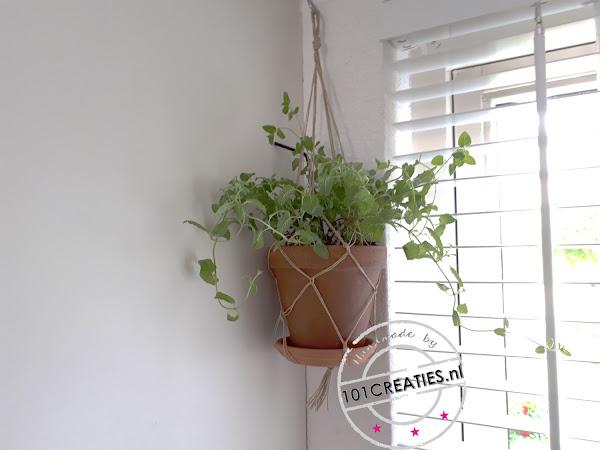 KNOPEN - PLANTENHANGER