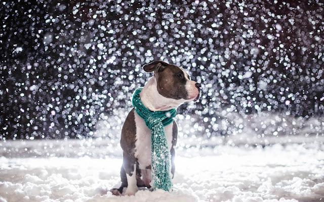 Hond met sjaal buiten in de sneeuw