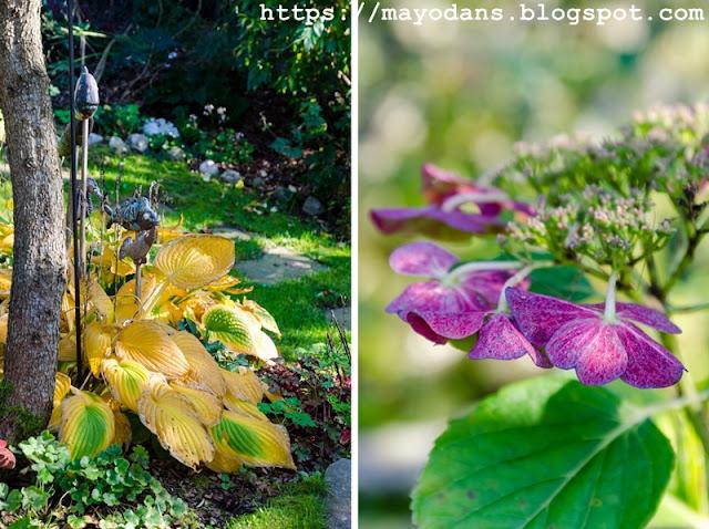 Garten im Herbst