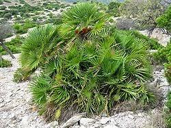 Plantas aromáticas y Medicinales del Bosque Mediterráneo