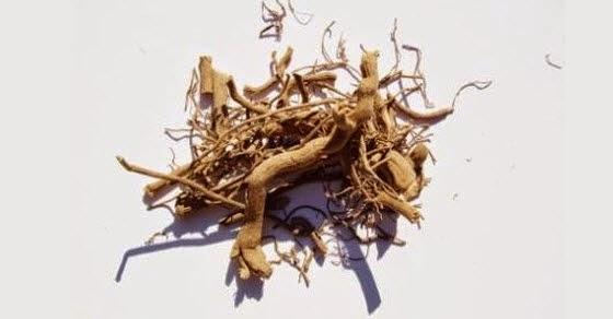 biljka kava kava upotreba