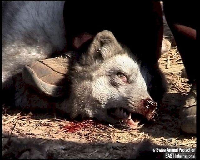 American Literature: Animal Cruelty