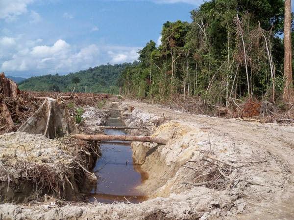Perkebunan Kelapa Sawit, air tawar