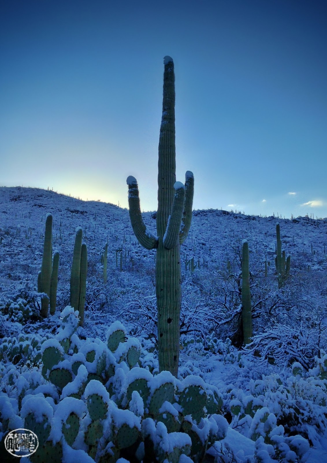 Snapseeded Snow In Tucson School Sabino Canyon And