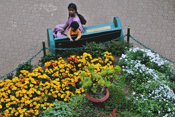 India-Gradina-Botanica