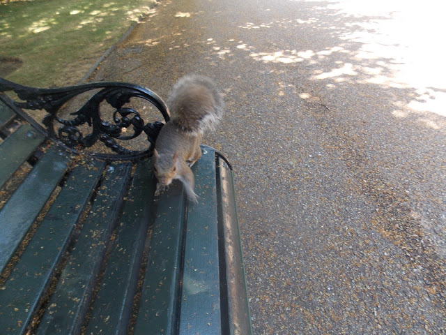 Squirrel in London