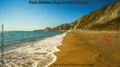 Answer of Find the Animal Puzzle