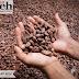 Cita Rasa Cokelat Aceh Yang Menjadi Produk Masa Depan Rakyat Aceh