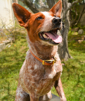 Handmade leather dog collar made in the USA
