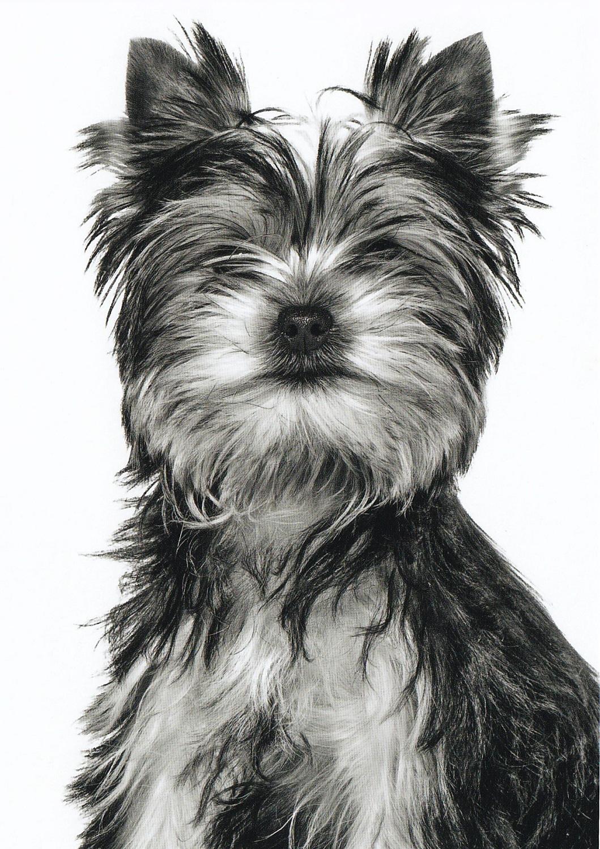 Carte postale Royal Canin prise à ma clinique vétérinaire