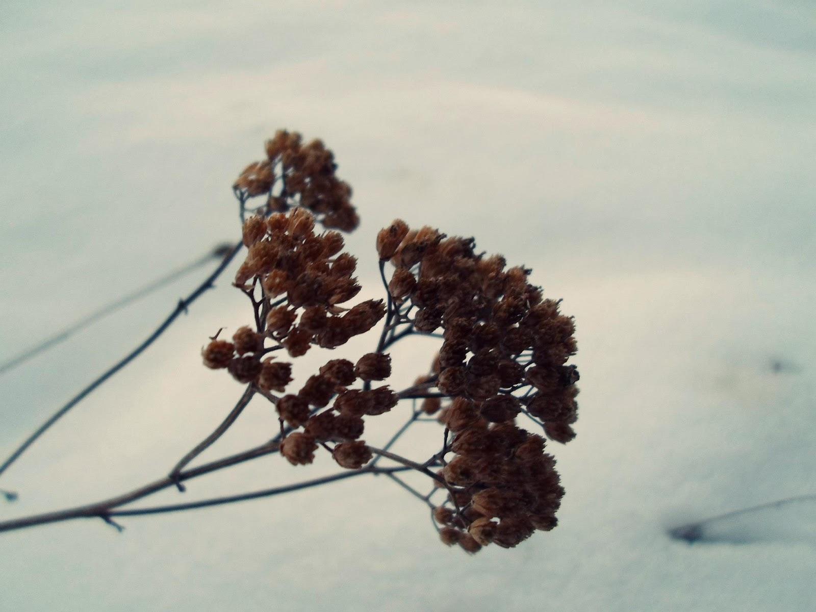 neige-nature