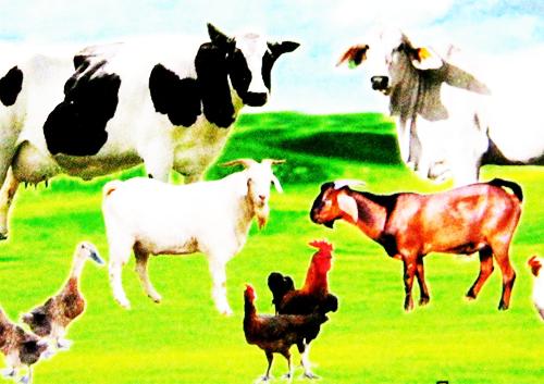 4600 Koleksi Gambar Binatang Yang Halal HD