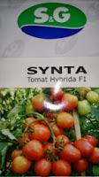 Benih,Synta, tomat, tahan virus,kuning, keriting, unggul, dataran rendah, tinggi, petani, SG Seed, Tomat Synta murah