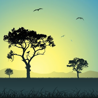 Picture of trees and landscape