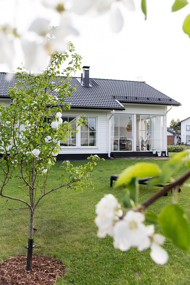 Villa H, valkoinen talo, päärynäpuu, piha, puutarha, lasitettu terassi