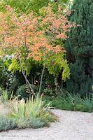 Garten bepflanzen mit Bäumen, Sträuchern, Immergrünen, Stauden, Gräsern und Zwiebelpflanzung
