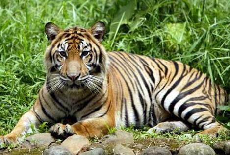 Jenis-Jenis Hewan (Fauna) di Indonesia