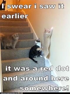 Cat vs laser pointer - 5 6