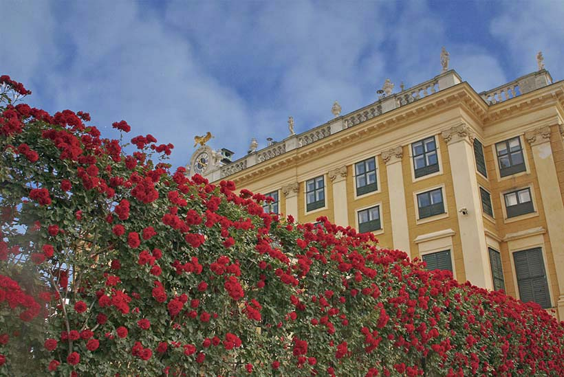 #Flower wall at the side of the #Schönbrunn palace.