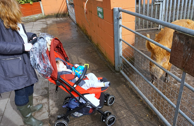 baby in pushchair looking at a pig