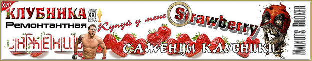 Клубника Королева Елизавета купить рассаду, 0985674877, 0957351986, Украина Strawberry