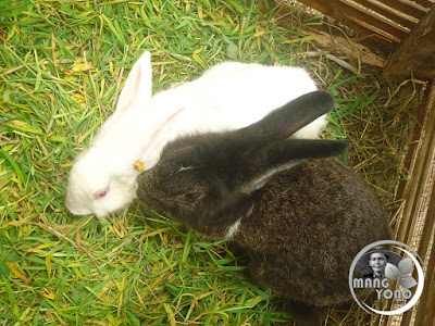 FOTO : Sepasang kelinci sedang mojok ... hehehe