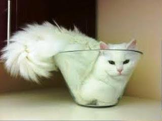 Gambar Wallpaper Kucing Lucu Banget 20002