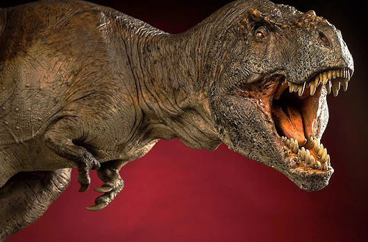 Tyrannosaurus rex was a sensitive lover, scientists find