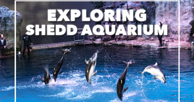 A Cowboy 39 S Life Explore Shedd Aquarium