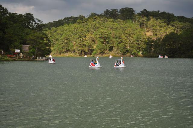 Cisnes lago Xuan Huong