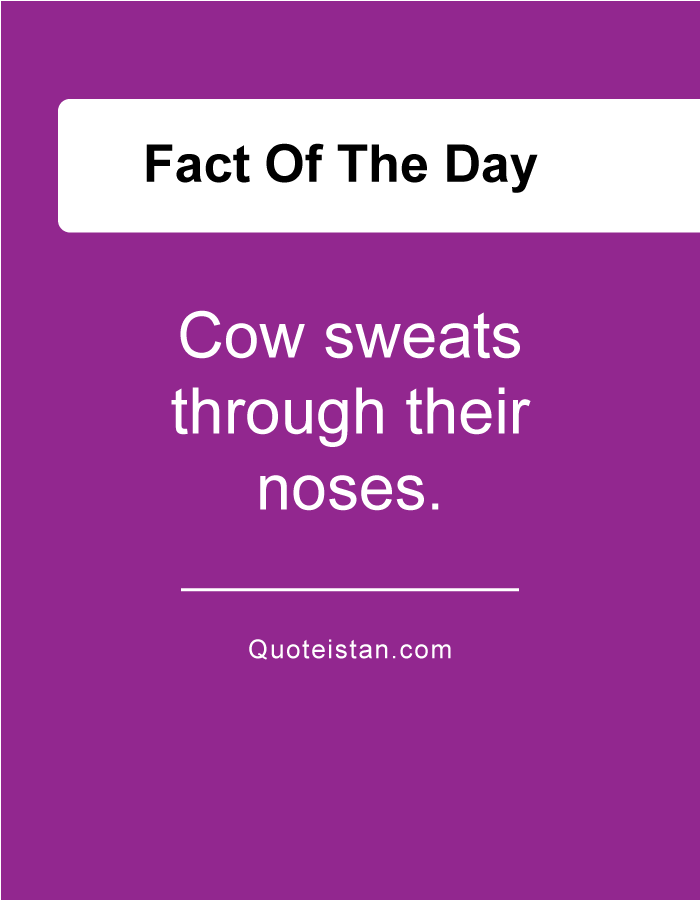Cow sweats through their noses.