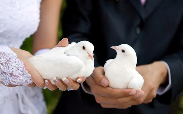 Фотографии: ритуал выпускания голубей на свадьбе