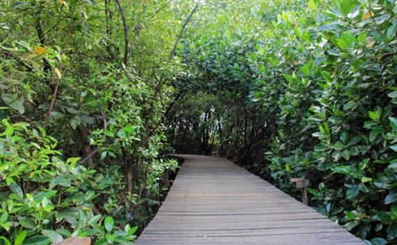 Hutan Magrove Bakau BJBR