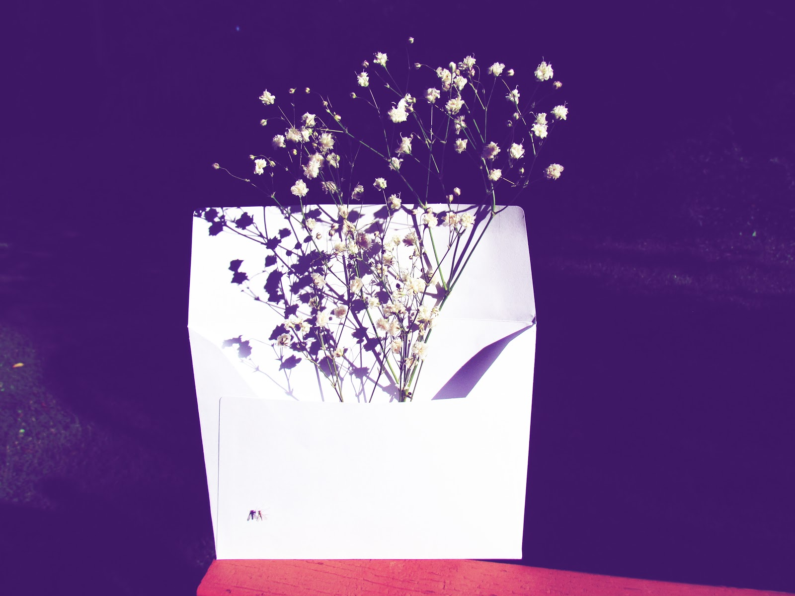 Gloom and Glow White Envelope, Dark Background, and White Baby's Breath Flower Branches