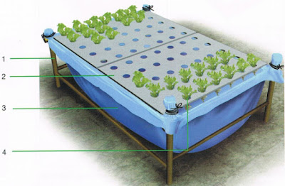 membuat-tanaman-hidroponik