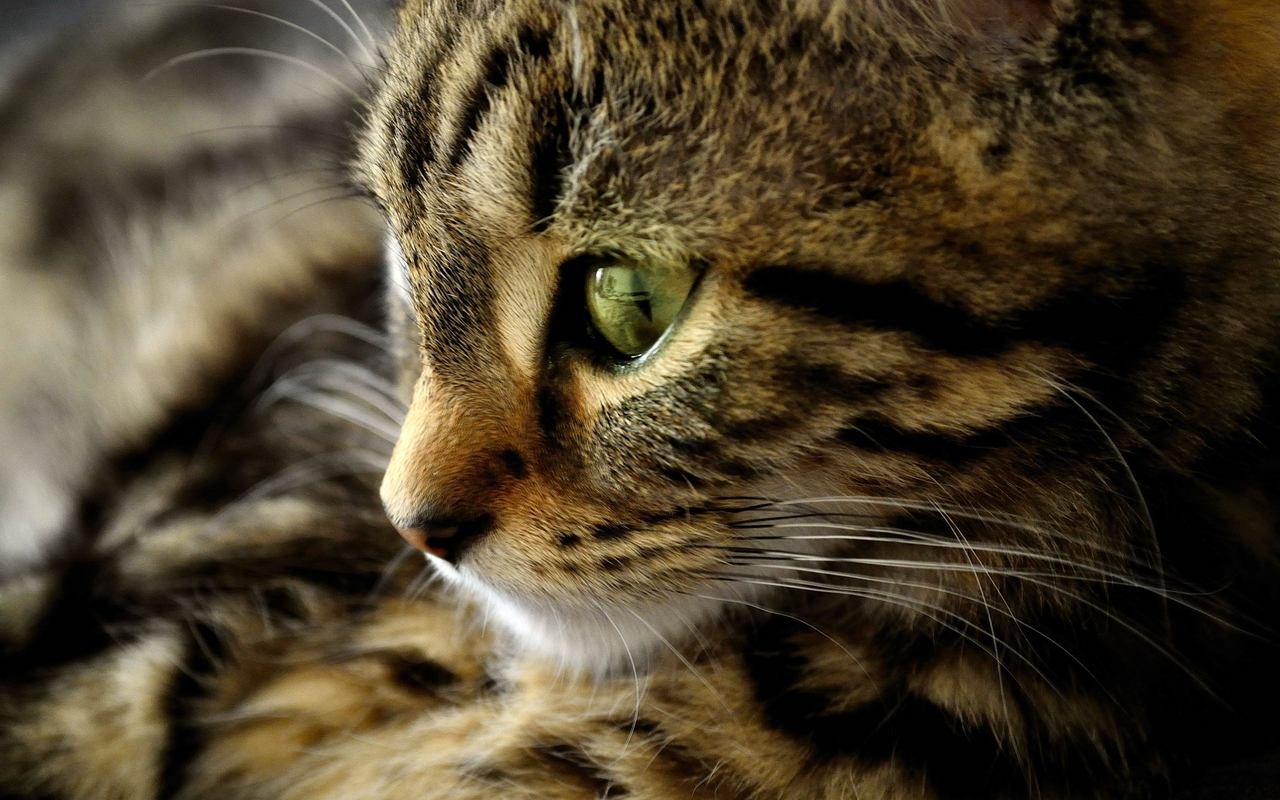 kitty animals sweet cat lovely eye kucing animal cats nice wallpapers