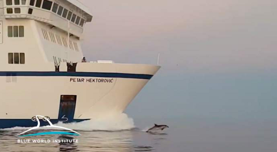 Central Dalmatia, Where Ferries are Guided by Dolphins - Central