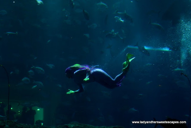 The Mermaid Show at The Dubai Mall