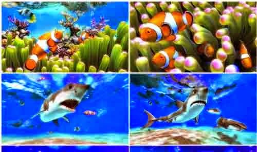 Download Wallpaper Aquarium Ikan Bergerak Biovisi0