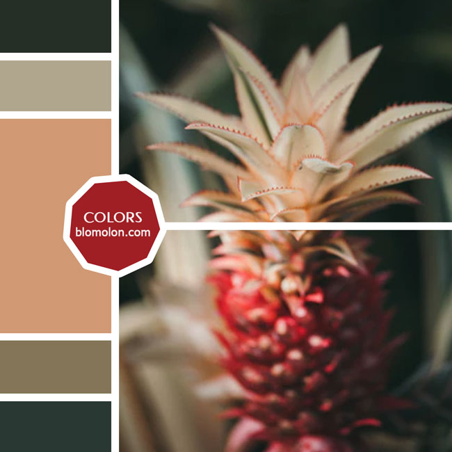 variedad_en_color_moodboard_40