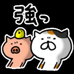 Game everyday tortoiseshell cat and pig3