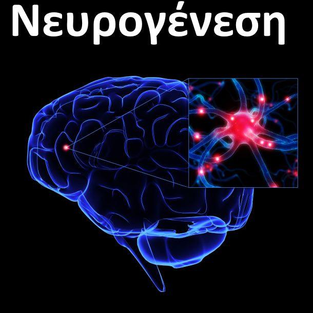 Πώς μπορούμε να αναπτύξουμε νέους νευρώνες στον εγκέφαλο | Braining.gr