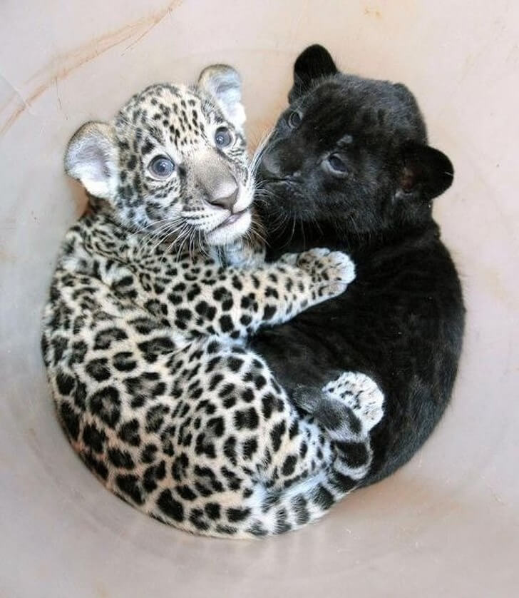28 Adorably Pictures Of Baby Animals We Want To Adopt Right Now