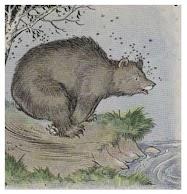 Dongeng Beruang dan Lebah (Aesop) | DONGENG ANAK DUNIA