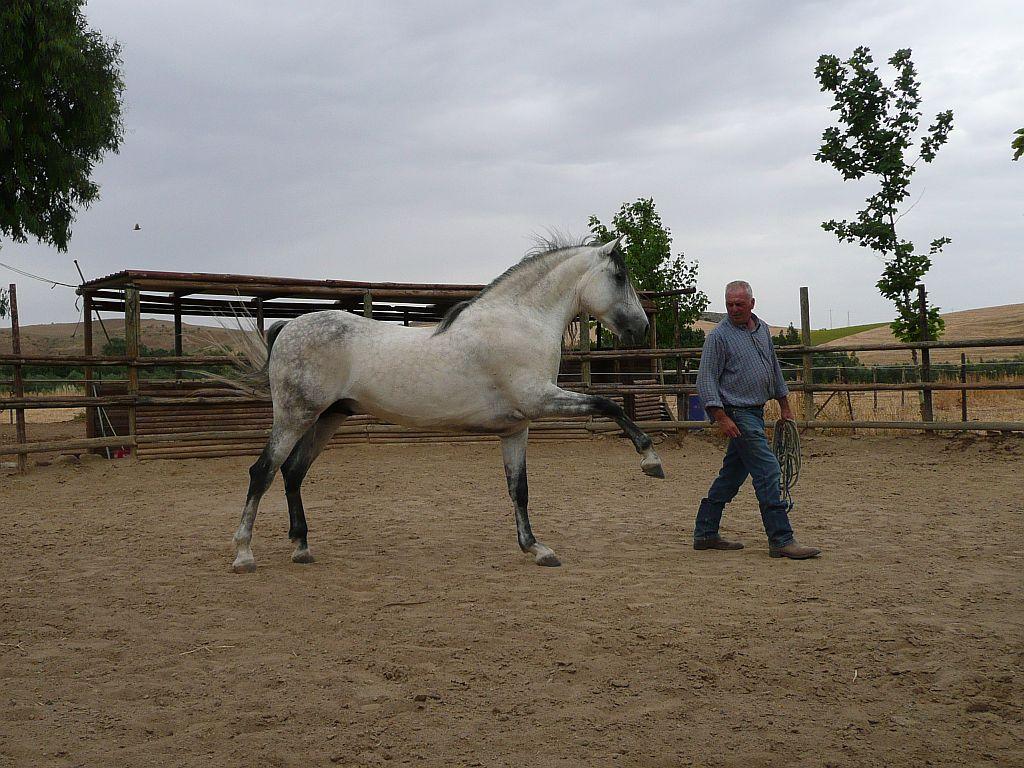 Horse Training Basics – A Beginner's Guide | Better Horse ... |Horse Training