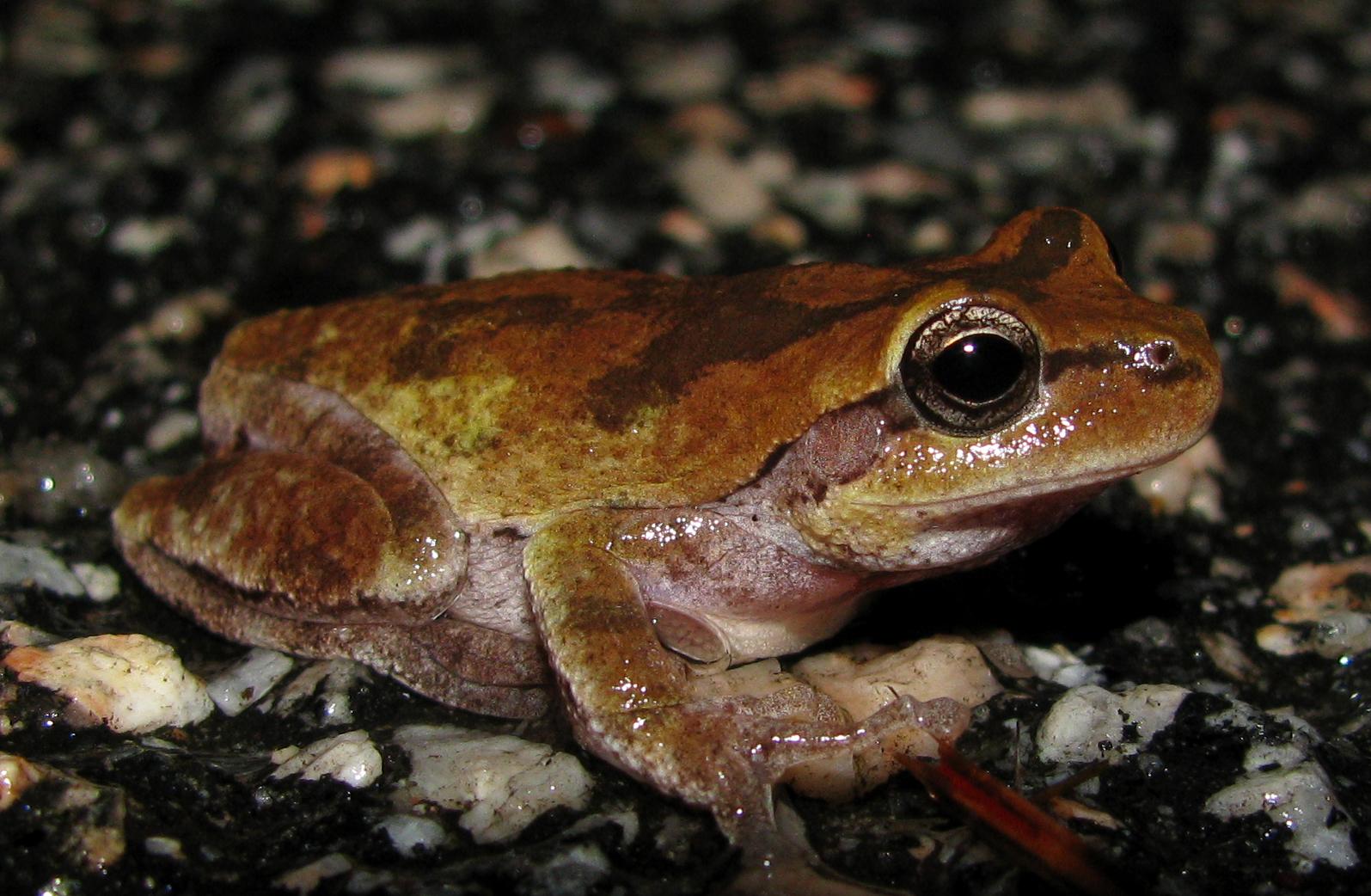 Birding Bros Blog Fish Amp Amphibians