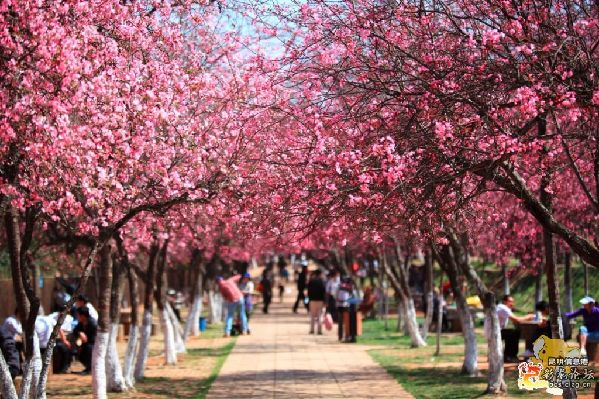 5 most beautiful places to visit in spring, spring pictures, cherry blossoms, indian blogger, british blog, spring in china