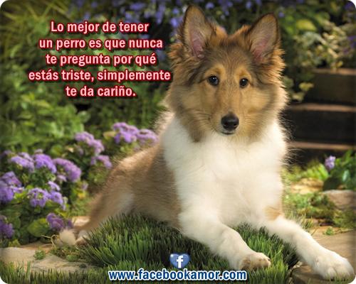 Frases Bonitas Para Perros Imagui