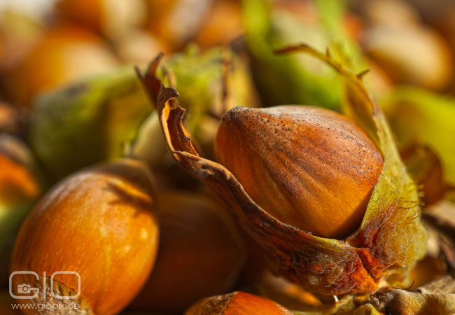Photo: Hazelnuts Closeup