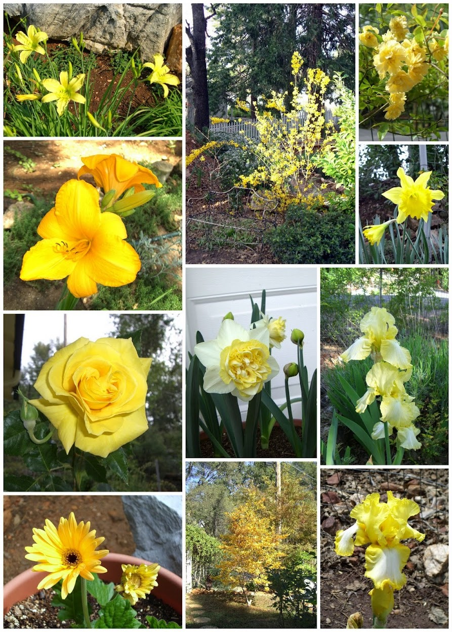 YELLOW FLOWER COLLAGE 2009